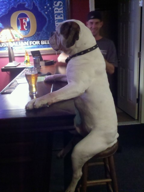 chien-assis