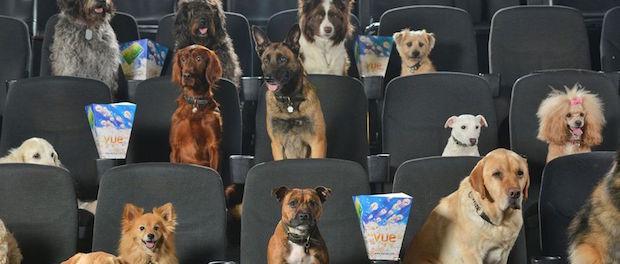 Un cinéma vous autorise de venir voir un film avec … votre chien !