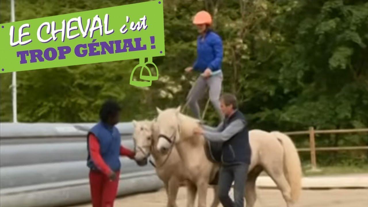 Le cheval: animal le moins bien traité du 21 ième siècle